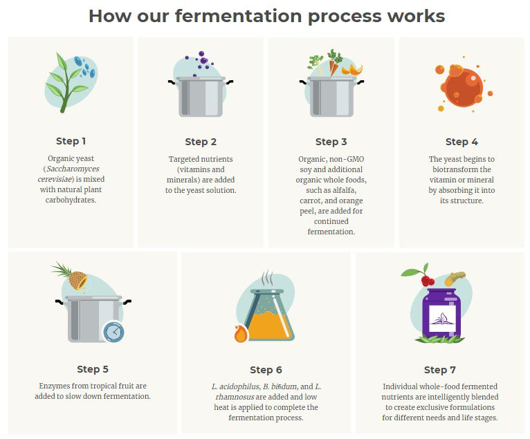 fermentation process infographic